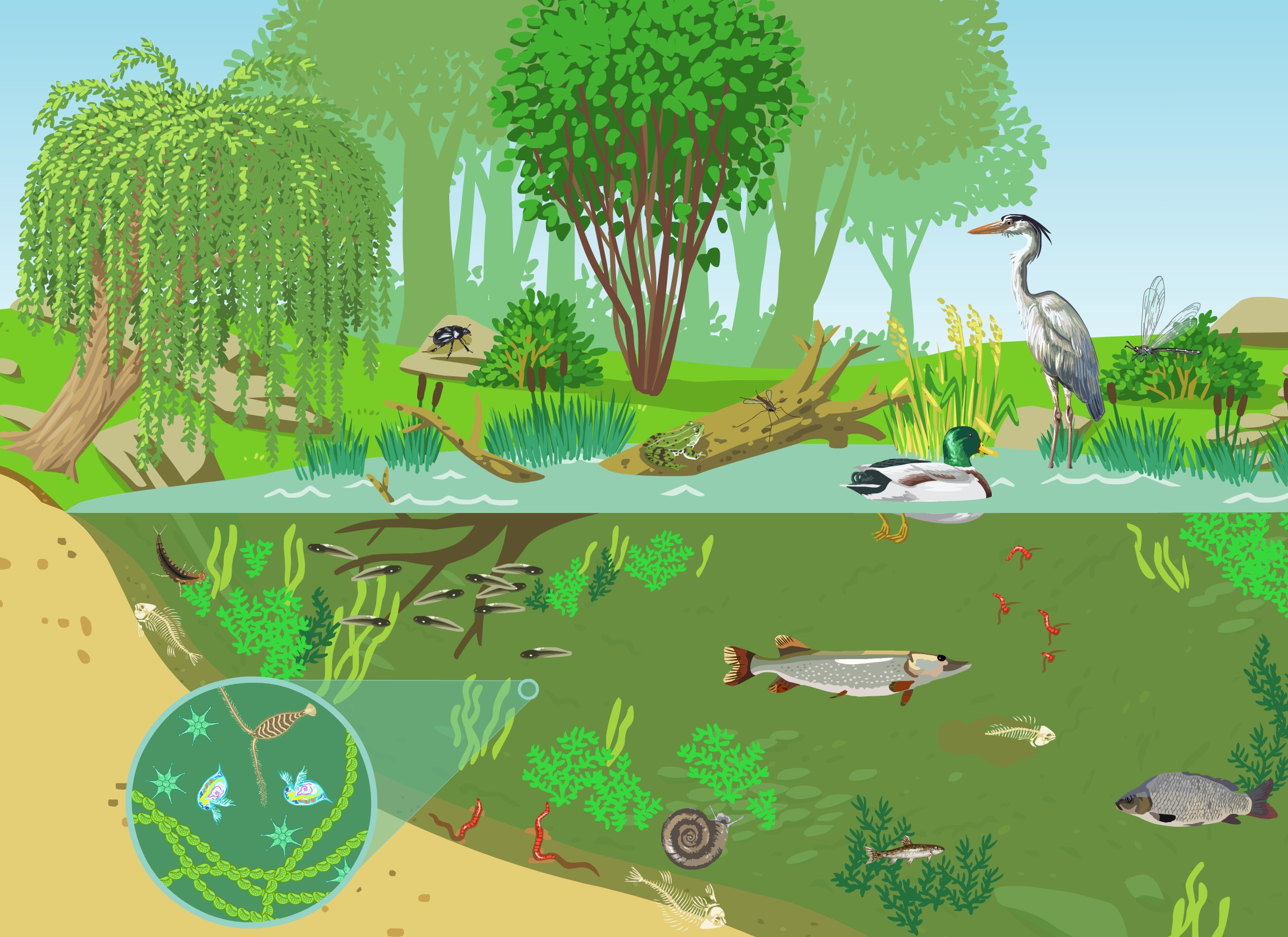 picture of a pond ecosystem